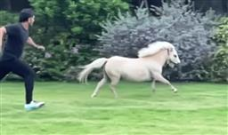 Dhoni 'tests his fitness' with daughter Ziva's pony at Ranchi farmhouse; wife Sakshi shares video