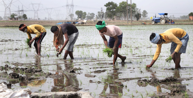 No promised 8-hr power supply as paddy sowing begins in Punjab