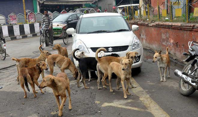 6 months on, no progress in dog sterilisation drive in Amritsar