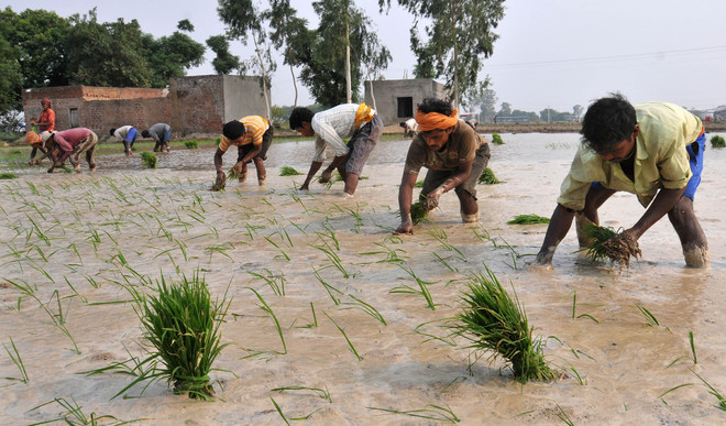 Where is promised 8-hour power supply, ask farmers