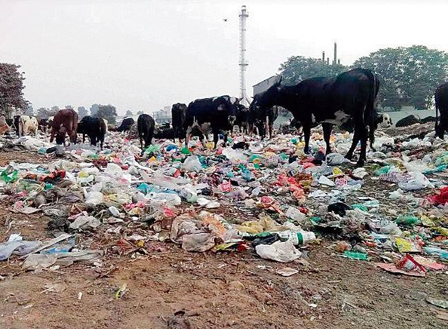 Panchkula: Memo against garbage dumped at Jhuriwala