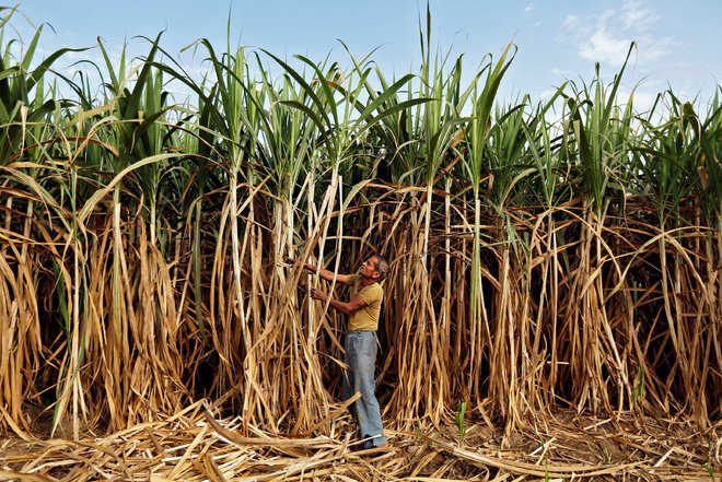 Cane growers protest in Dhuri