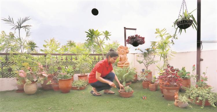 Try out garden on the rooftop