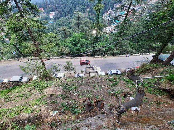 Amid curfew, trees axed in Khalini area