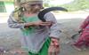 Mandi woman injured in leopard attack
