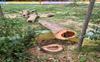 Govt school in Patiala village axes trees sans nod, complaint filed