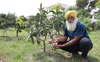 Dragon fruit, exotic mangoes, golden apple now at home