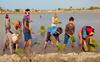 In Bathinda villages women, children make up for labour shortage in fields