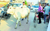 Ensure  treatment of  injured cows in districts: Haryana CM