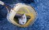 Kullu trout farmers irked at price drop in Bilaspur