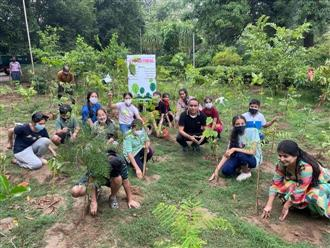 A 'micro forest' created by schoolkids in city