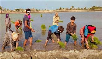 Women, children make up for labour shortage in fields