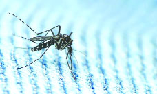 With 2 malaria cases, Ludhiana district second in Punjab