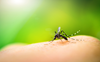 Global warming may limit spread of dengue fever, says study