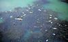 Fish found dead in Rajindra Lake, Patiala