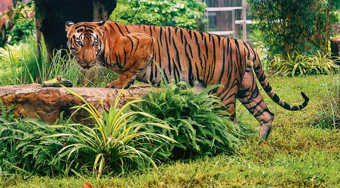 Accreditation for 14 tiger reserves in country on occasion of International Tiger Day