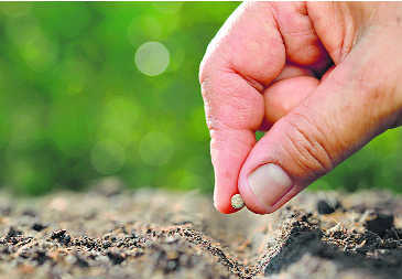 Act against firms selling spurious seeds: Himachal farmers