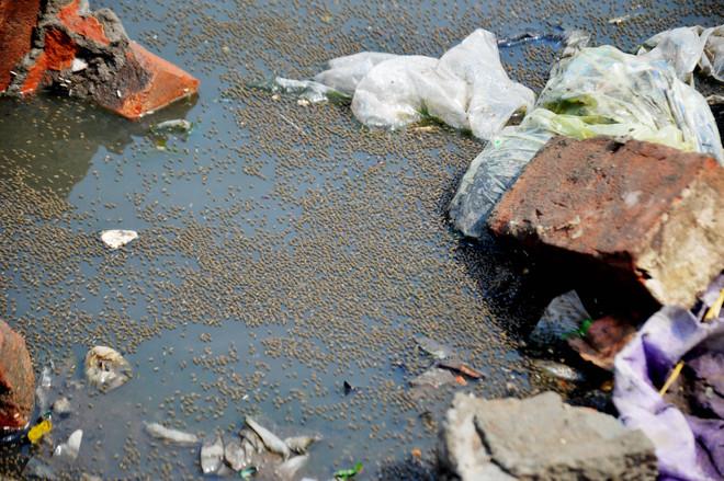 Dengue strikes in Ludhiana, MC yet to start fogging