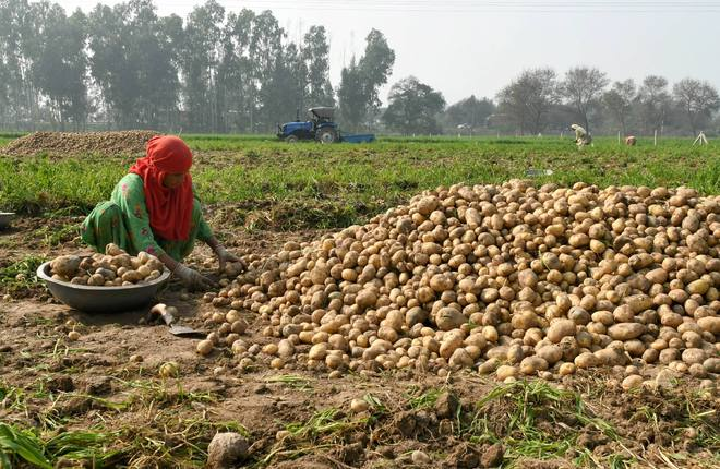Rs 3,000 cr paid to 42L ineligible 'farmers' to be recovered: Govt