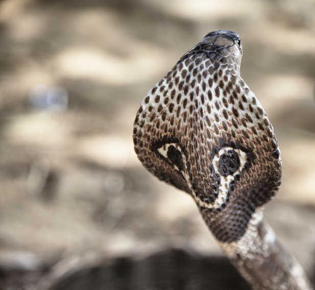 15-year-old boy dies of snakebite