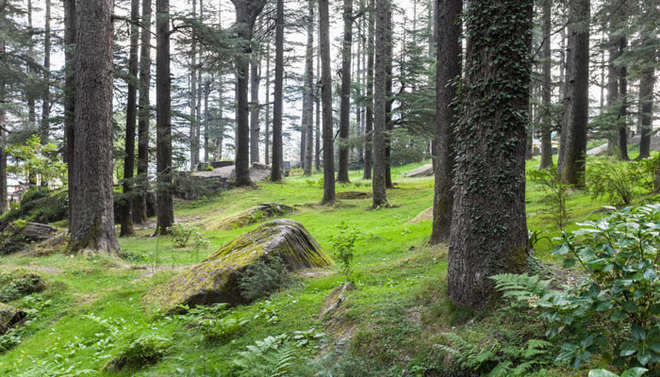 NHAI, Punjab Forest Dept start green drive along highways