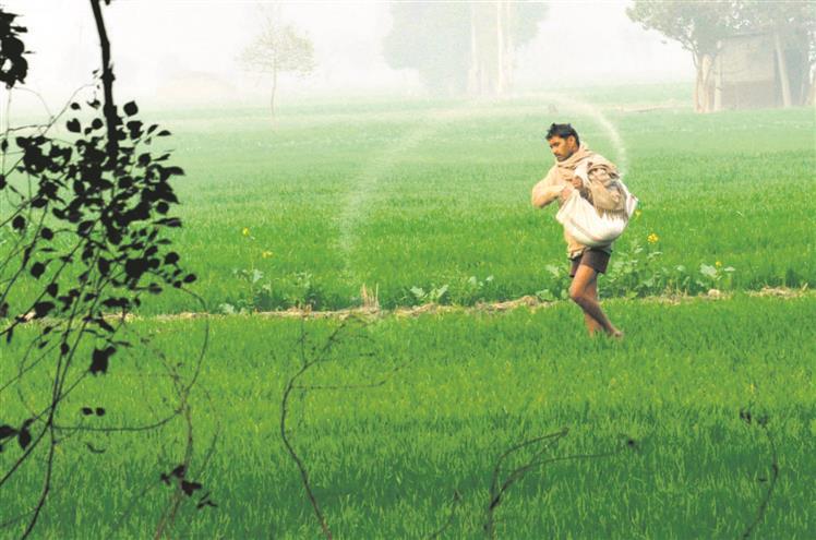 Light rain brings cheer to Malwa paddy growers
