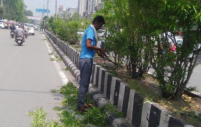 Amritsar MC begins pruning of roadside trees