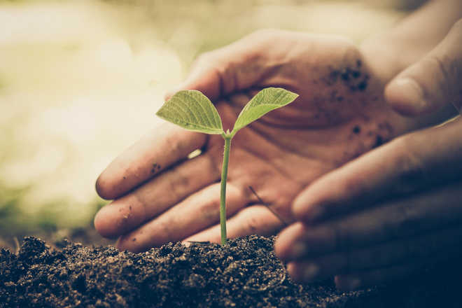 Touchstone Educationals plant over 100 saplings in Sector 22, Chandigarh