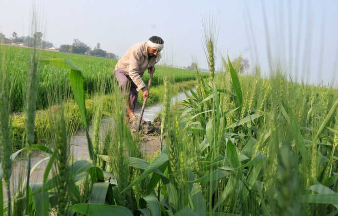PM-Kisan scheme: Centre says 32% beneficiaries ineligible, Punjab disagrees