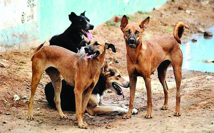 Stray dogs have right to food, citizens right to feed them: HC