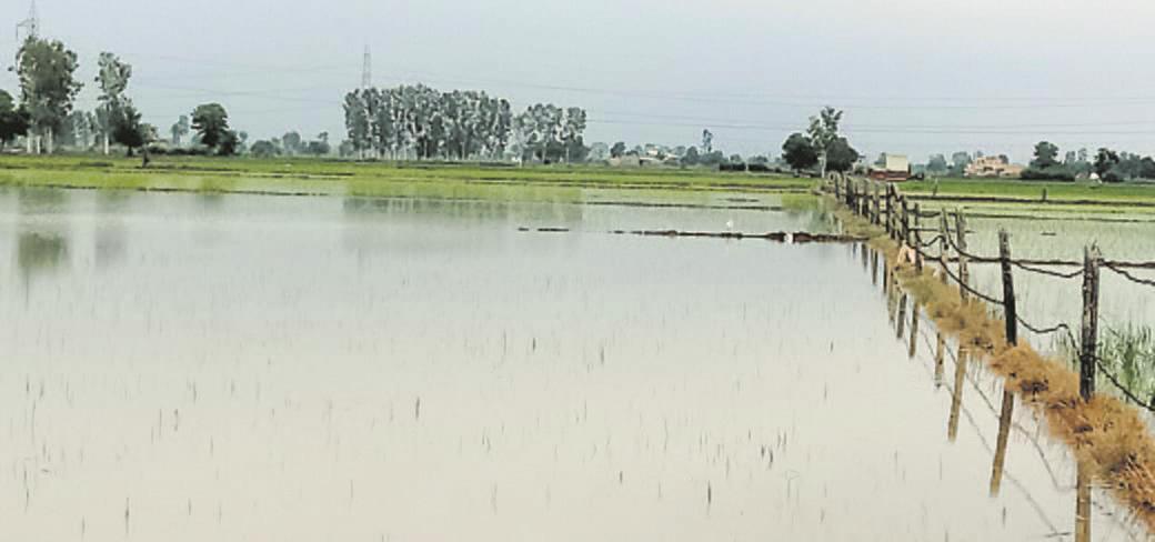 Hisar, Fatehabad, Jind flooded