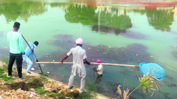 Dead fish removed, cleaning of lake on