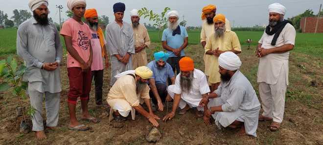 Their aim — to raise 550 mini-forests