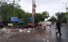 Remove stray cattle from Rohtak roads