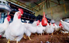 First human case of bird flu being probed, no suspects so far: Centre