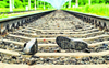 Man found dead on railway track in Lalru