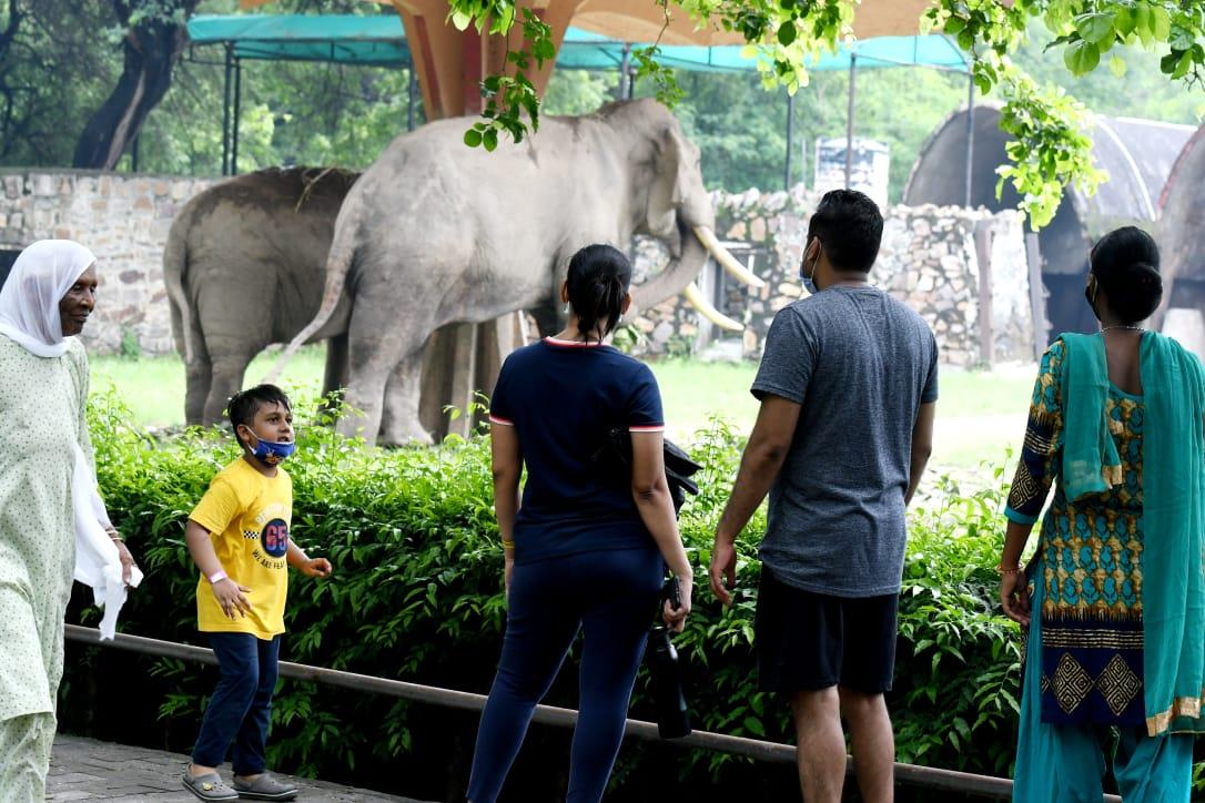 Delhi zoo reopens after being temporarily shut during second Covid wave