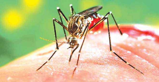 55 dengue cases in Delhi this year