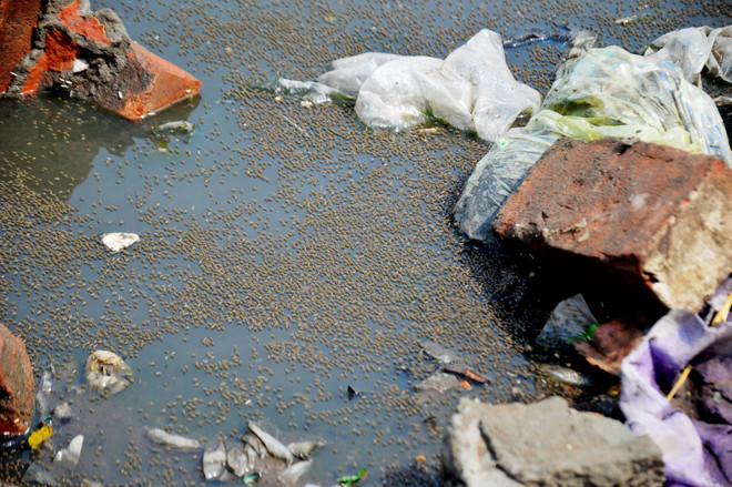 Waterborne diseases on the rise; 523 cases, 5 outbreaks this year in Ludhiana