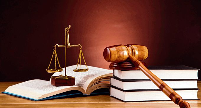 High court: Suspend Shimla forest officer for not concluding trees felling probe