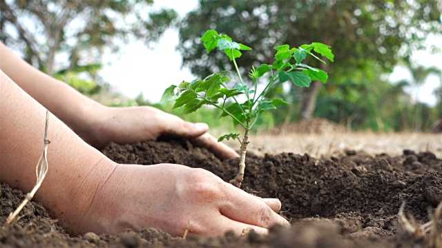 Lawyers, judges plant saplings in Ludhiana courts complex