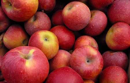Congress misleading masses on apple price, alleges BJP