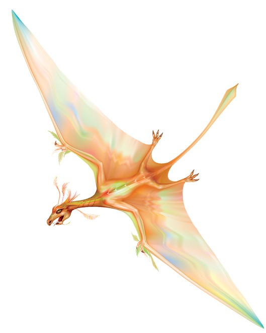'Flying Dragon' dinosaur roamed the southern skies too, scientists say