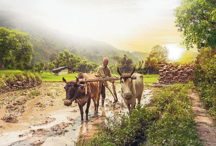 Recognising pluriactivity of farm families