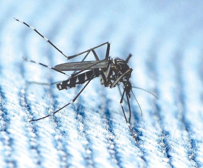 Dengue count reaches 94 in Ludhiana district