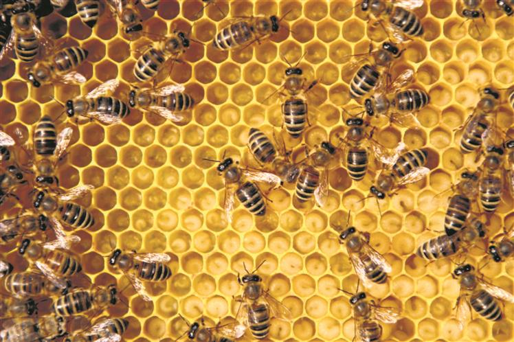 To tackle noise pollution, experts make beehive-like panels