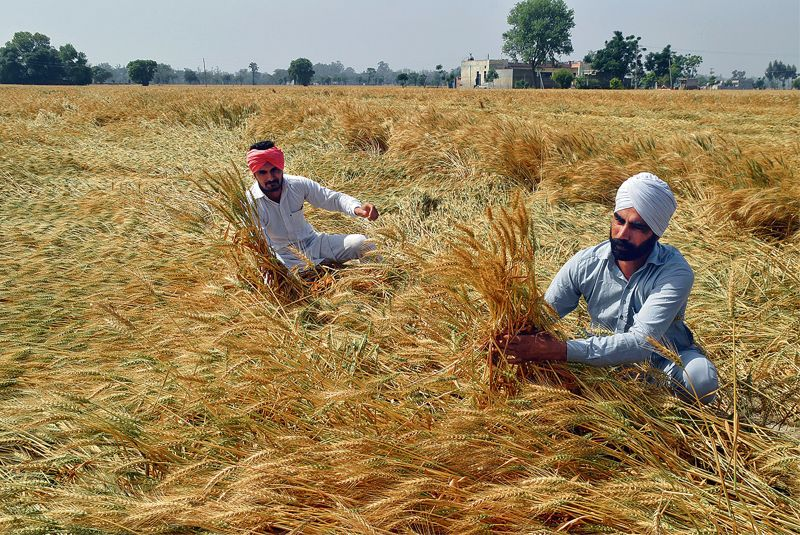 All pain, no gain for farmers