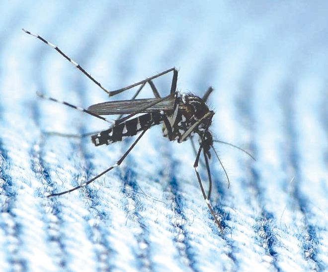 59 dengue cases in Chandigarh this month