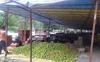 Lahaul farmers demand market yard at Karga