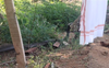 Zoho CEO's 'brave' encounter with 12-foot king cobra in Tamil Nadu village